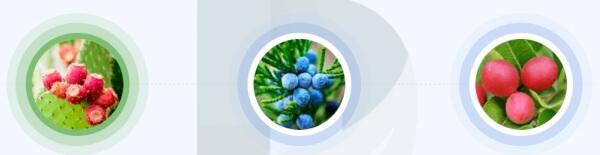 OvaShape - ingrédients et formule